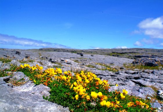 Biodiversity in County Clare