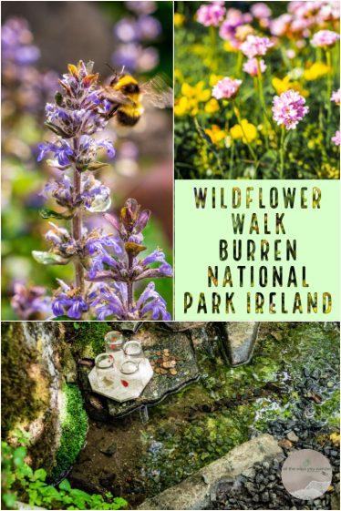 Wildflower Walk, Burren National Park, Ireland