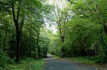 Woodland | ClareCoCo