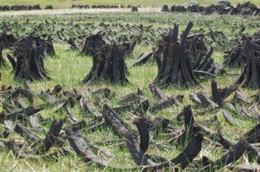 Turf stacked to dry | Ragna Gruendler 2012