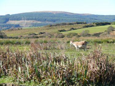 View of Mount Callan from Cloontabonniv | Ragna Gruendler 2012