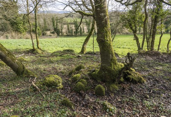 Saint Mochulla's, Mochuille's Holy Well, Cragg