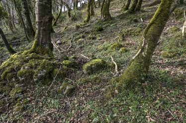 Saint Mochulla's Holy Well, Cragg | James Feeney