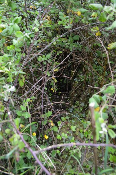 Saint Mochulla, Saint Mochuille's Holy Well, Rathmore | James Feeney