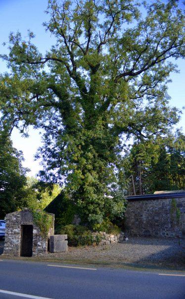 Tobercoolan, Tobar Cuailí, Saint Coolan's Well, Callahy   James Feeney