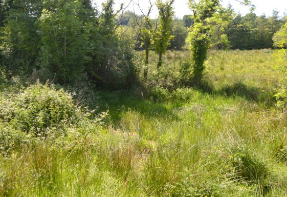 Saint Mochulla's Holy Well (possible), Ardbooly Lower, Tulla