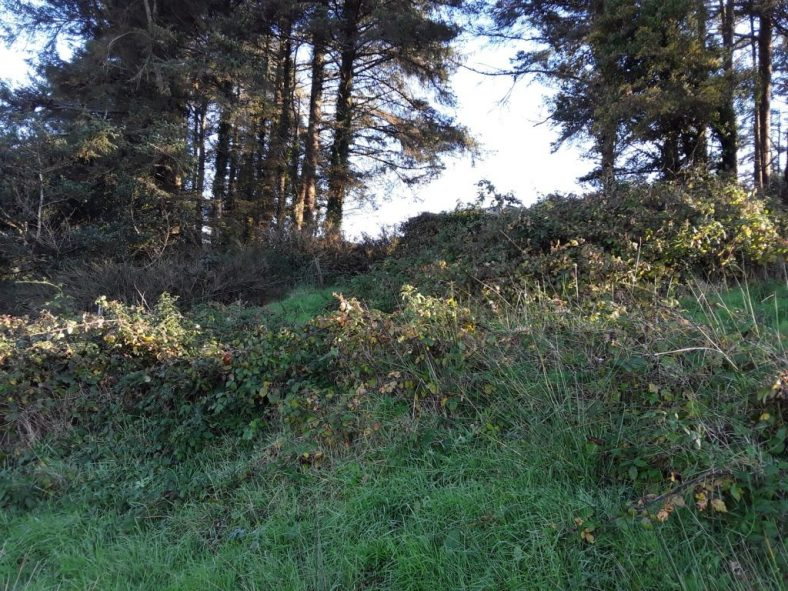 Site of Derryharriv Holy Well | Tony Kirby
